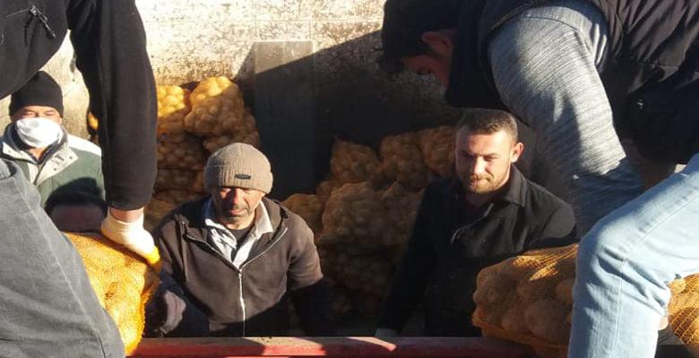 Felahiye'de 60 Bin Ton Patates Dağıtıldı
