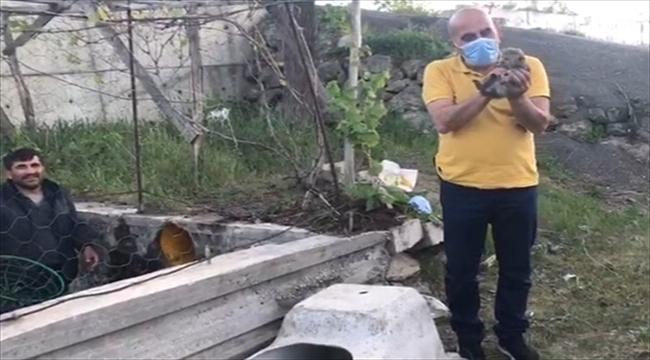 Sivas'ta anneleri telef olan 4 tilki yavrusunu sıkıştıkları menfezden itfaiye ekipleri kurtardı