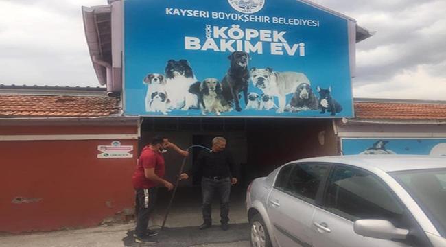 Felahiye'de Köpek Bakım Evi