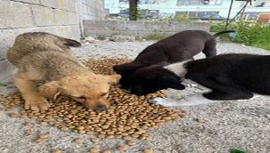 HAYTAP gönüllüleri kısıtlamada sokak hayvanlarını unutmadı