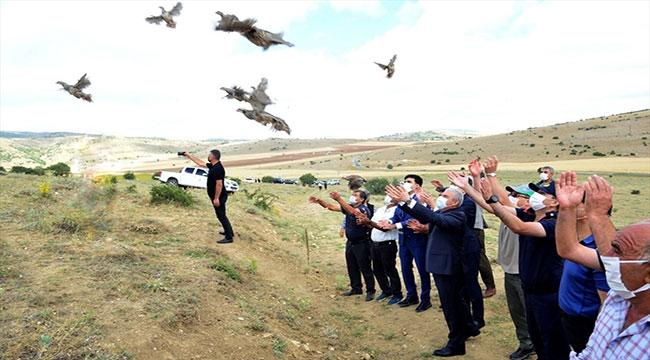 Kırşehir'de 425 kınalı keklik doğaya bırakıldı