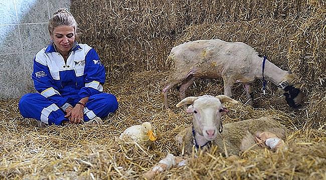 Antalya'daki orman yangınında kurtarılan hayvanların çiftlikte uyumlu yaşamı